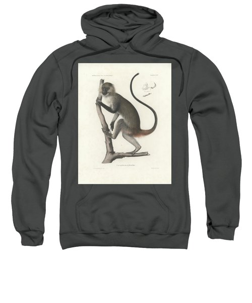 Sweatshirt featuring the drawing White Throated Guenon, Cercopithecus Albogularis Erythrarchus by J D L Franz Wagner