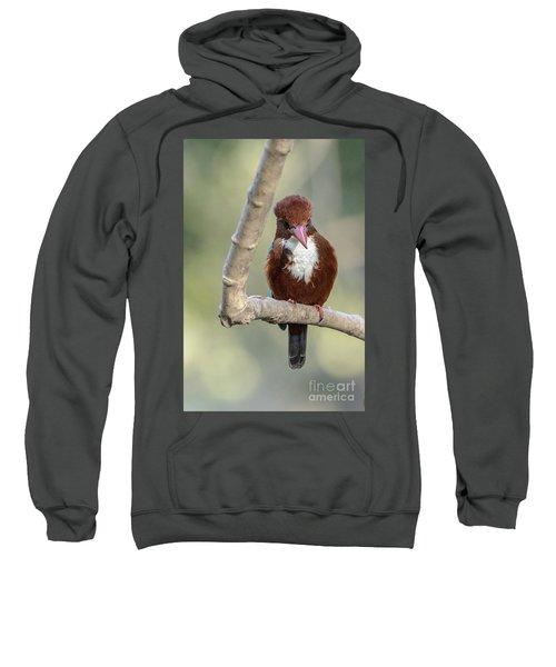 White-throated Kingfisher 01 Sweatshirt