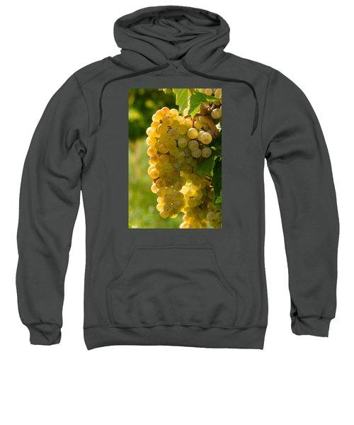 White Wine Grapes Sweatshirt