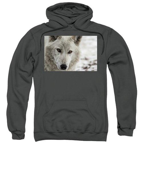 White Wolf II Sweatshirt