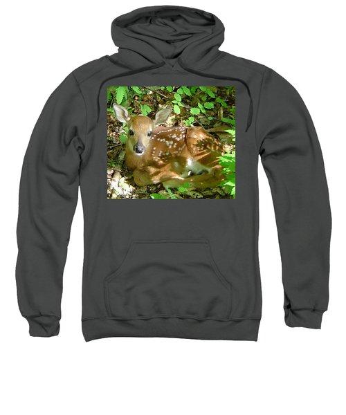 Whitetail Fawn II Sweatshirt