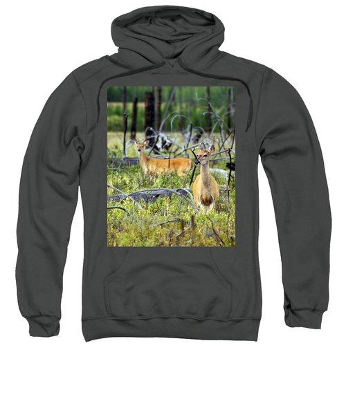 Whitetails Sweatshirt