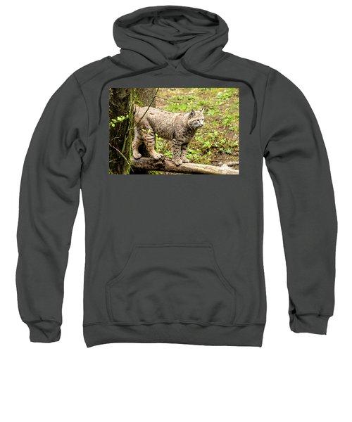 Wild Bobcat Sweatshirt