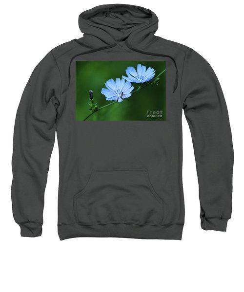 Wild Chicory Sweatshirt