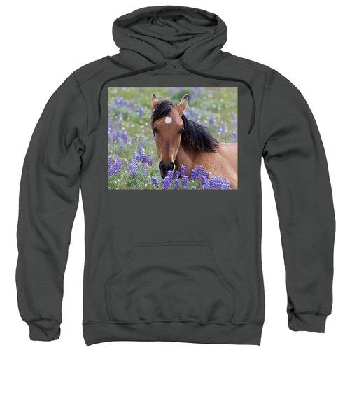 Wild Horse Among Lupines Sweatshirt