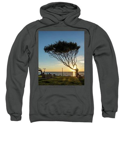 Wind Blown Tree Sweatshirt