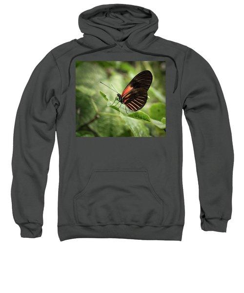 Wings Of The Tropics Butterfly Sweatshirt