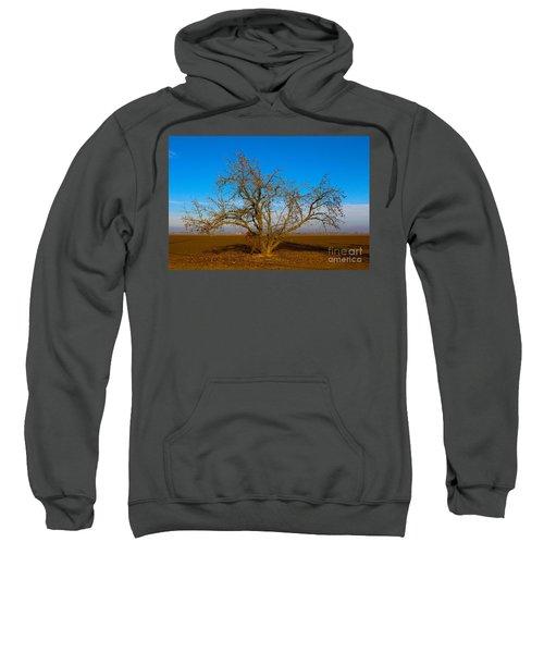 Winter Apple Tree Sweatshirt