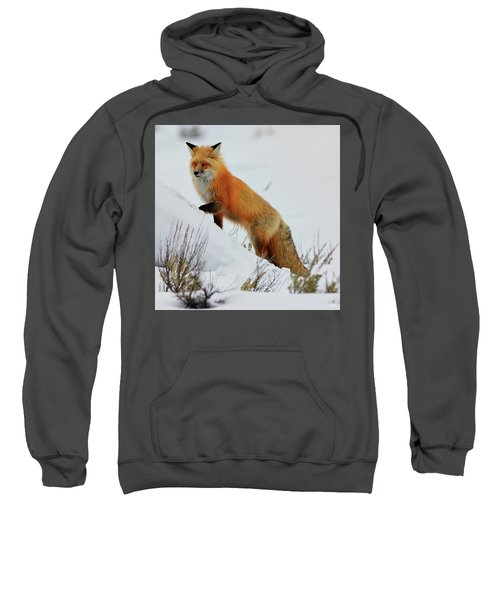 Winter Fox Sweatshirt