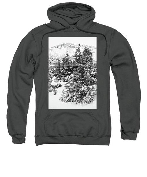 Winter Night Forest M Sweatshirt