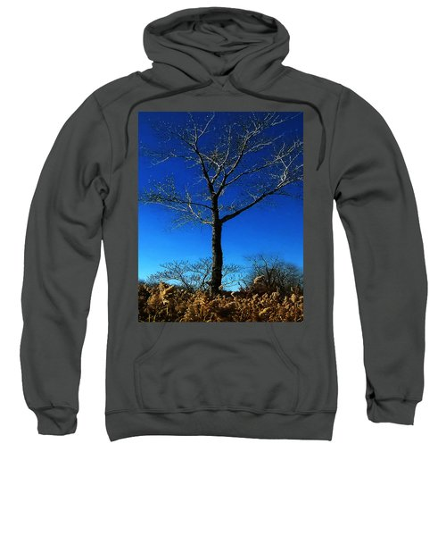 Winter Tree Sweatshirt