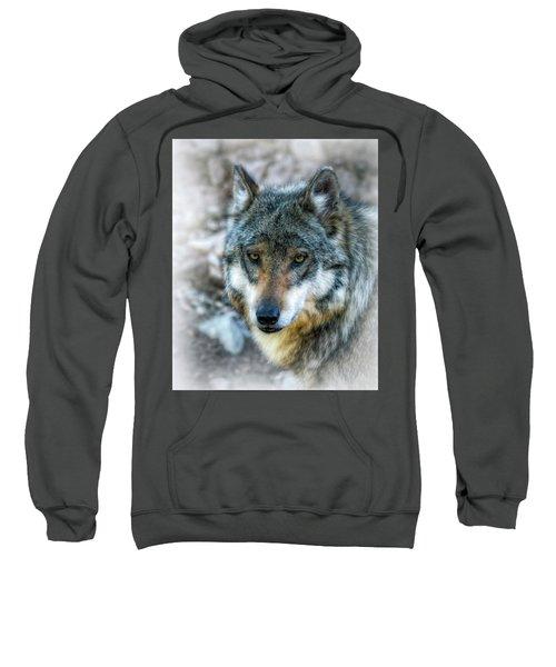 Wolf Gaze Sweatshirt