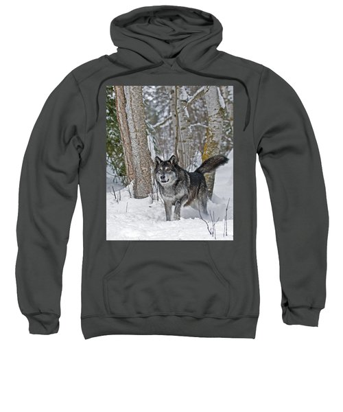Wolf In Trees Sweatshirt