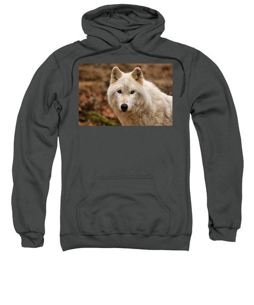 Wolf Watching Sweatshirt