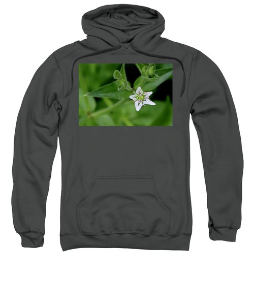 Woodland Wildflower Sweatshirt