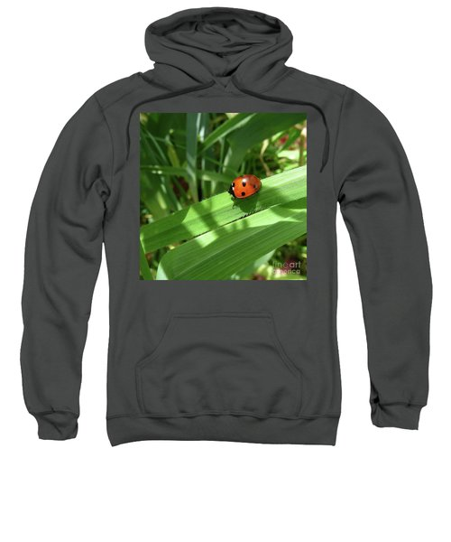 World Of Ladybug 1 Sweatshirt