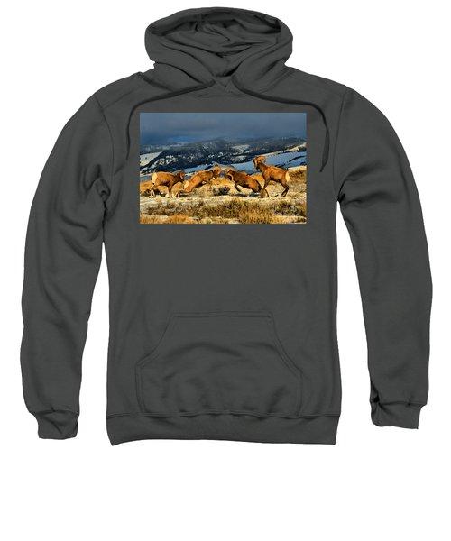 Wyoming Bighorn Brawl Sweatshirt