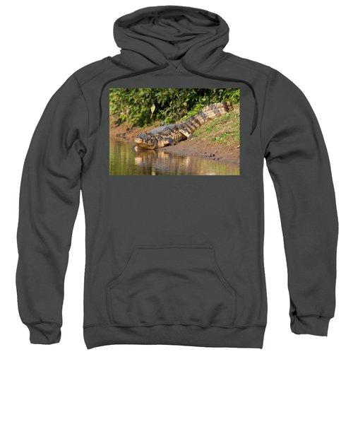 Alligator Crawling Into Yakuma River Sweatshirt