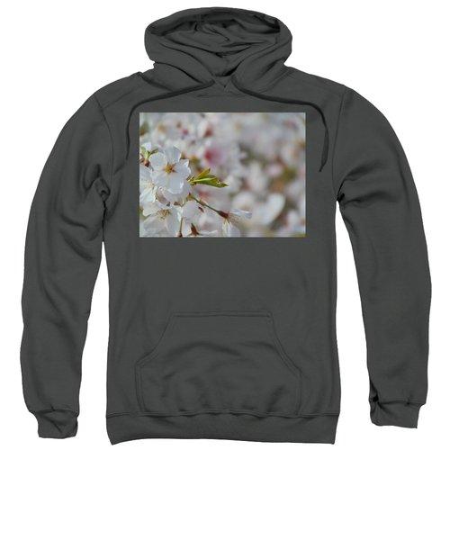 Yoshino Blooms Sweatshirt
