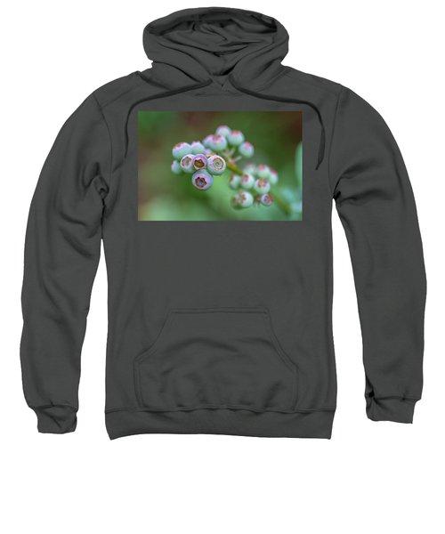 Young Blueberries Sweatshirt