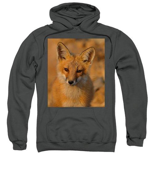 Young Fox Sweatshirt
