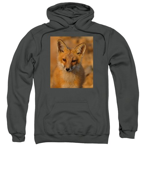 Young Fox Sweatshirt