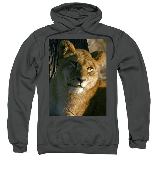 Young Lion Sweatshirt