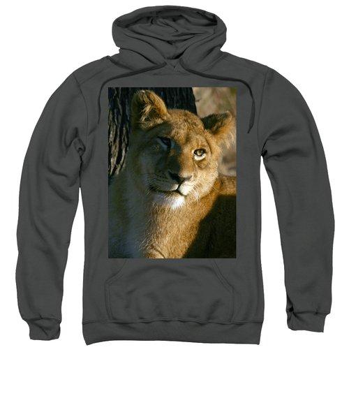 Young Lion Sweatshirt