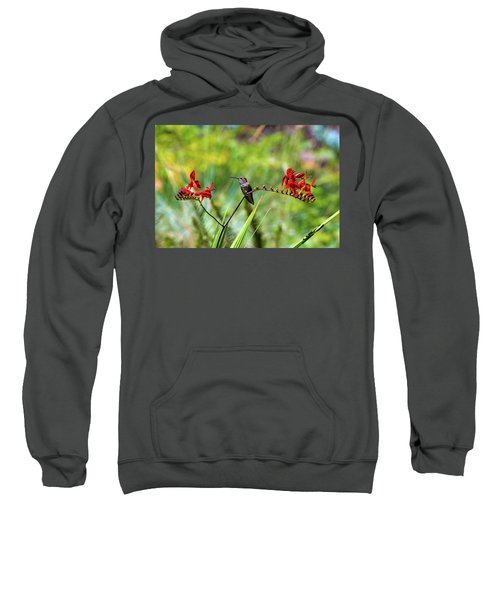 Young Rufous Hummingbird Perched On Flower Sweatshirt