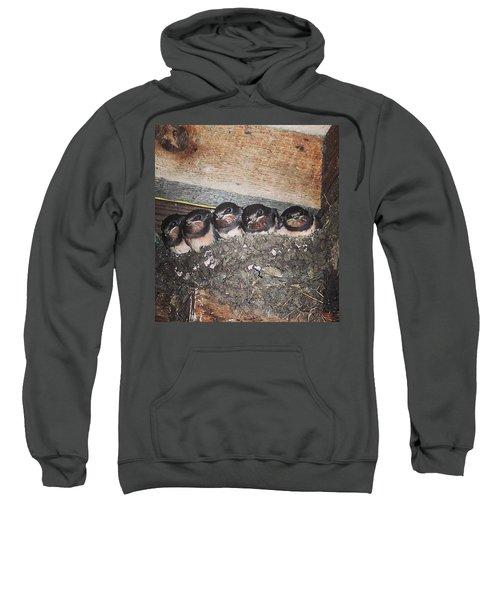 Young Swallows, Lancashire, England, Uk Sweatshirt