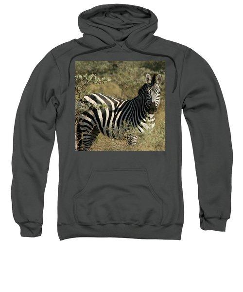 Zebra Portrait Sweatshirt