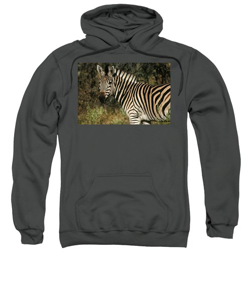 Zebra Watching Sweatshirt
