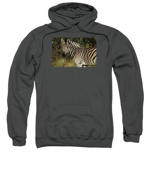 Zebra Watching Sweatshirt