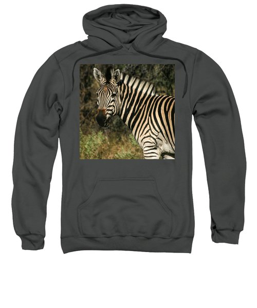 Zebra Watching Sq Sweatshirt