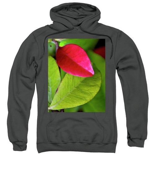 Colours. Red Sweatshirt