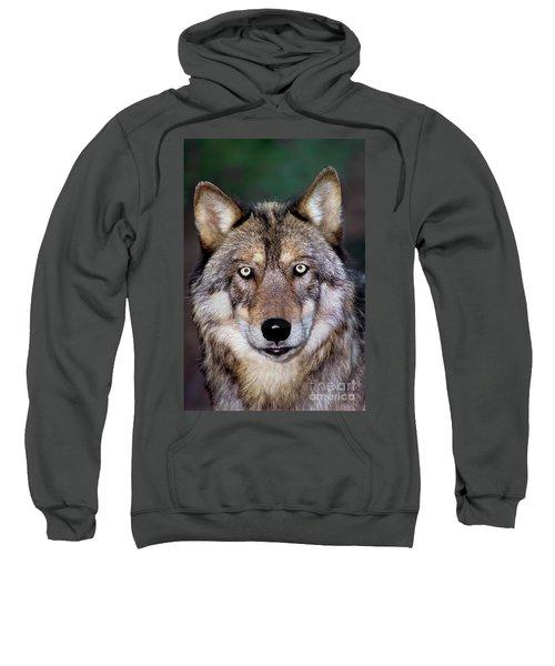 Gray Wolf Portrait Endangered Species Wildlife Rescue Sweatshirt