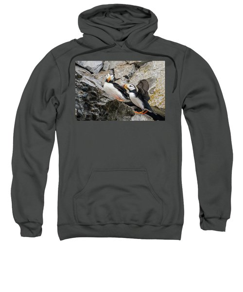 Horned Puffin Pair 2 Sweatshirt