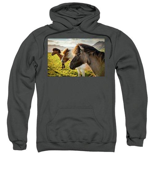 Icelandic Horses Sweatshirt