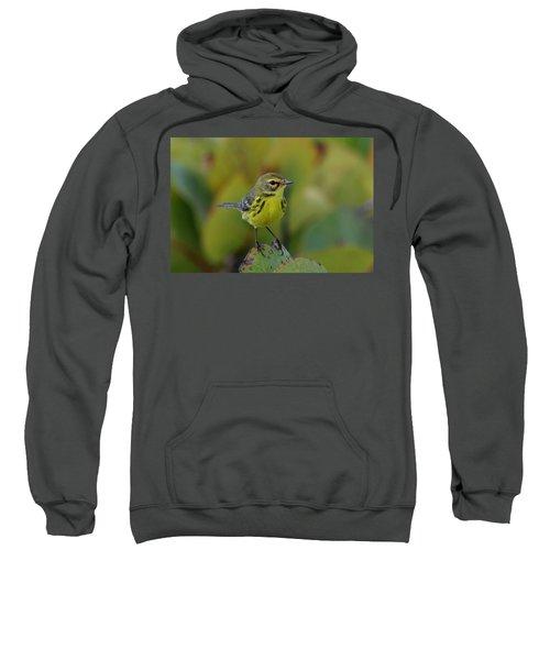 Prairie Warbler Sweatshirt