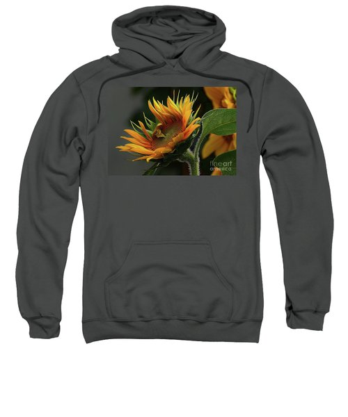 The Close Up Sweatshirt