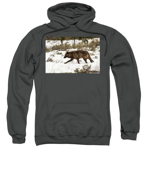 W10 Sweatshirt