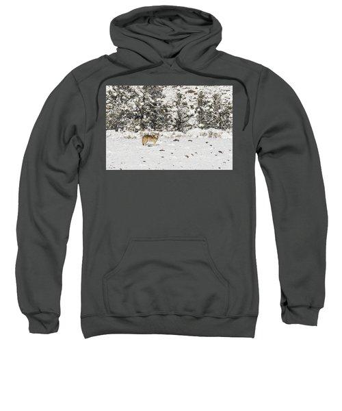 W16 Sweatshirt