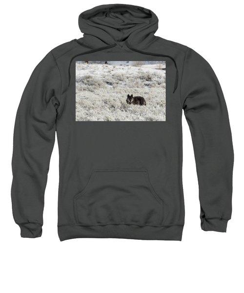 W18 Sweatshirt