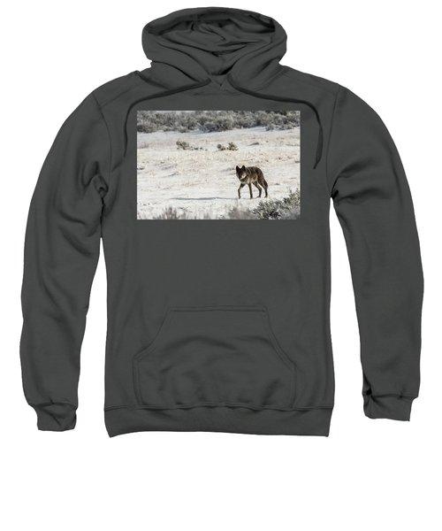 W19 Sweatshirt