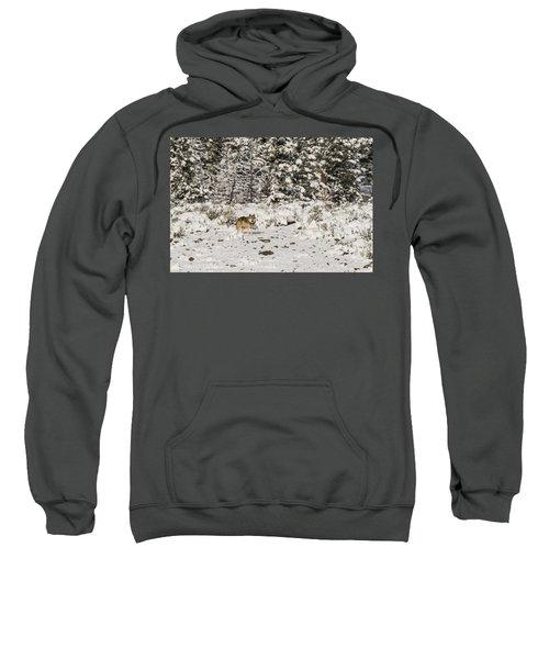 W20 Sweatshirt