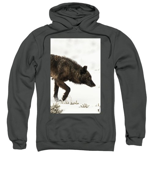 W46 Sweatshirt