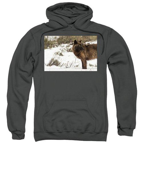 W6 Sweatshirt