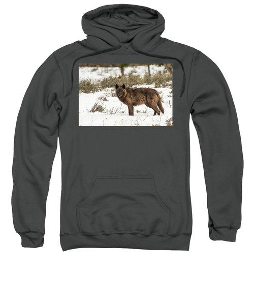W7 Sweatshirt