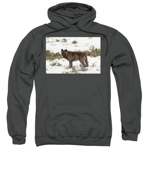 W8 Sweatshirt