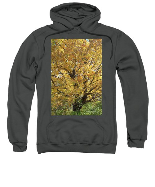 2018 Edna's Tree Up Close Sweatshirt